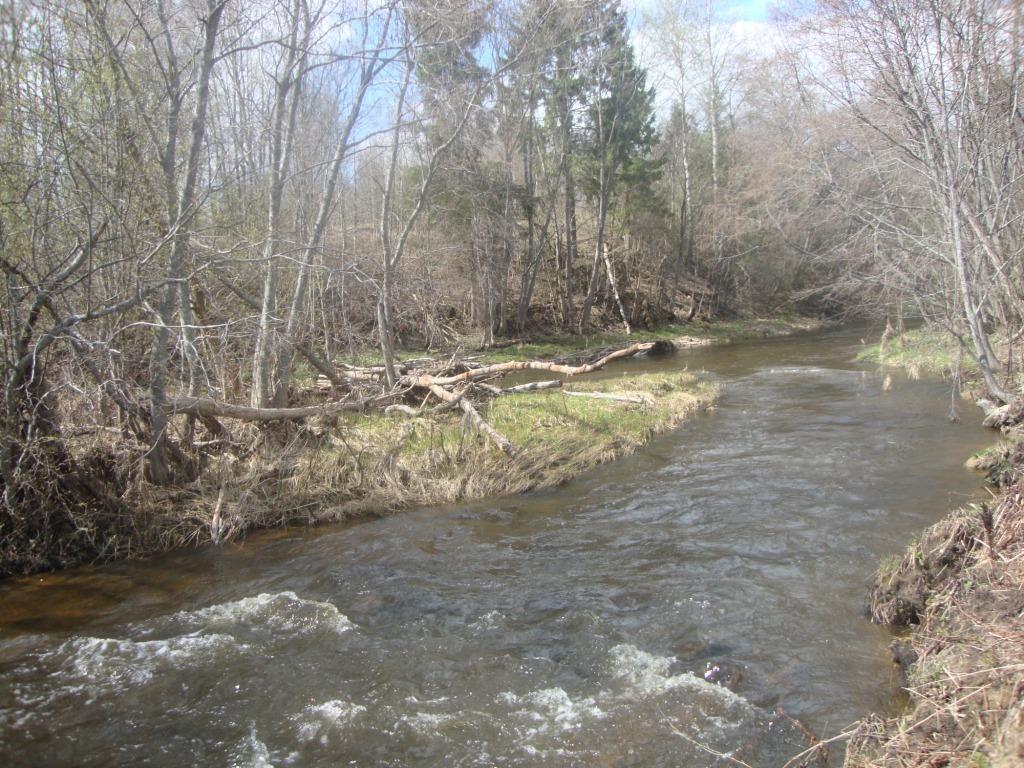 Река Витка весною.