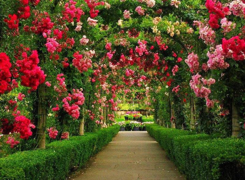 Летние цветы в саду
