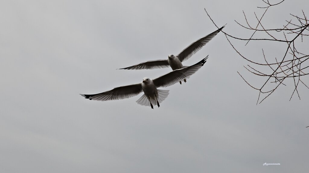 Птицы на озере
