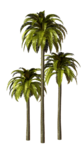 Palms  (24).png