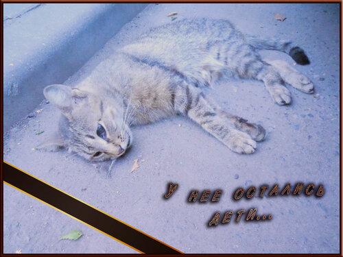 Минск. SOS! Убили кормящую кошку, нужна помощь двоим котятам!