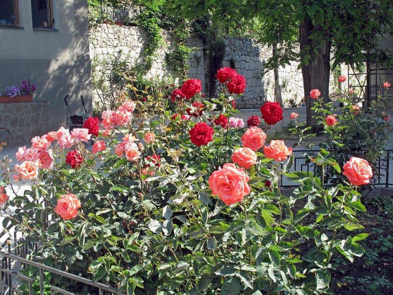 Дивные розы Крыма