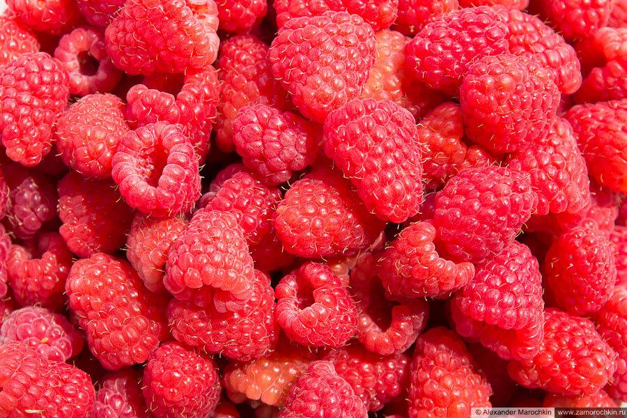 Малина | Raspberry | Rubus idaeus