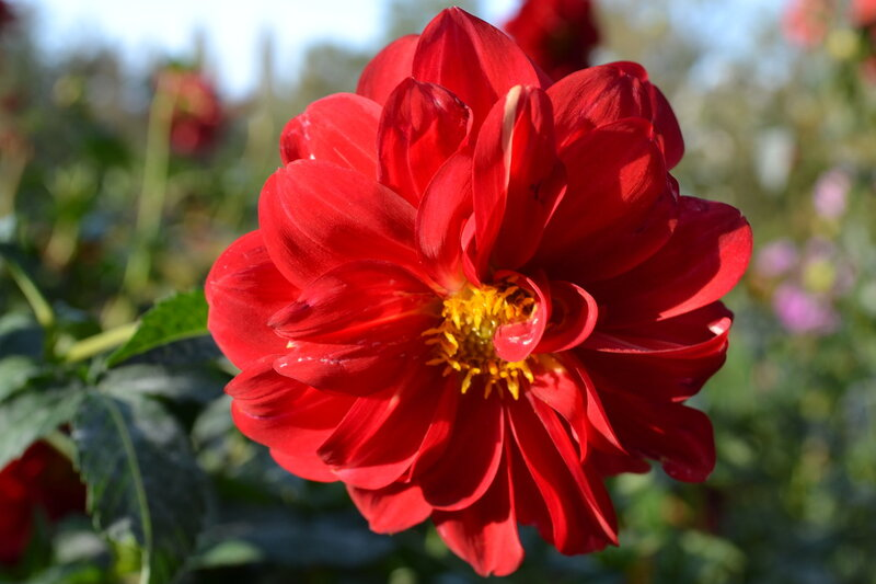 цветы в ботаническом саду Симферополя
