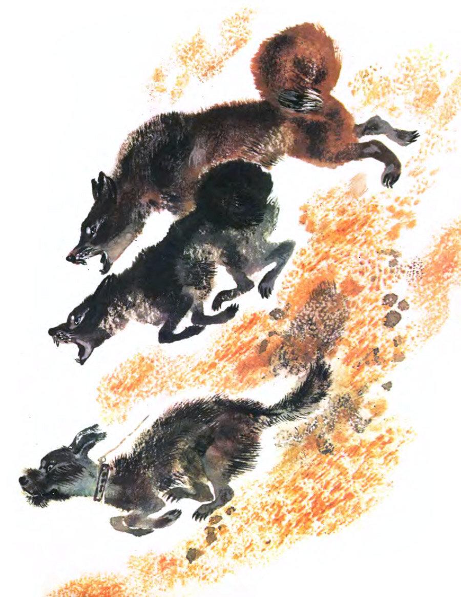 Рисунки из рассказа волчишко чарушина 111