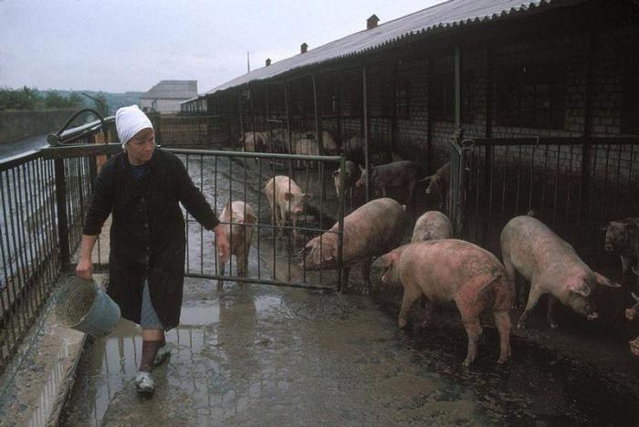 Донецкая ферма шахтеров, которая обеспечивает их едой, 1988 год. 7. Благословление пищи