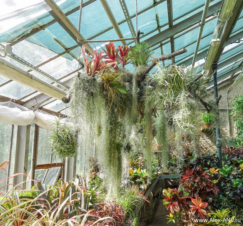 Многие растения предпочитают смотреть на прохожих свысока.