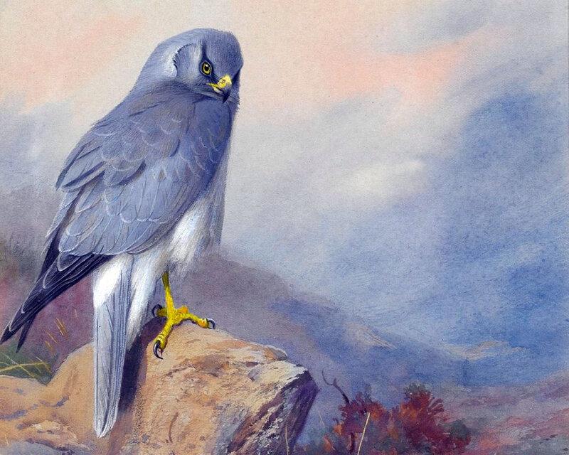 Афоризм о попугаев