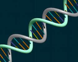 Ученые нашли ген, заставляющий ткани восстанавливаться