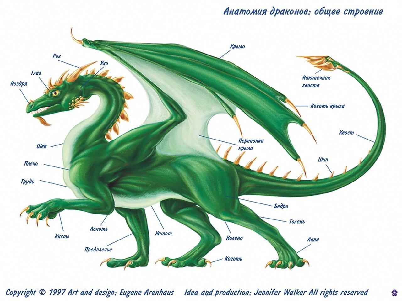 Трехглавый дракон в рисунках