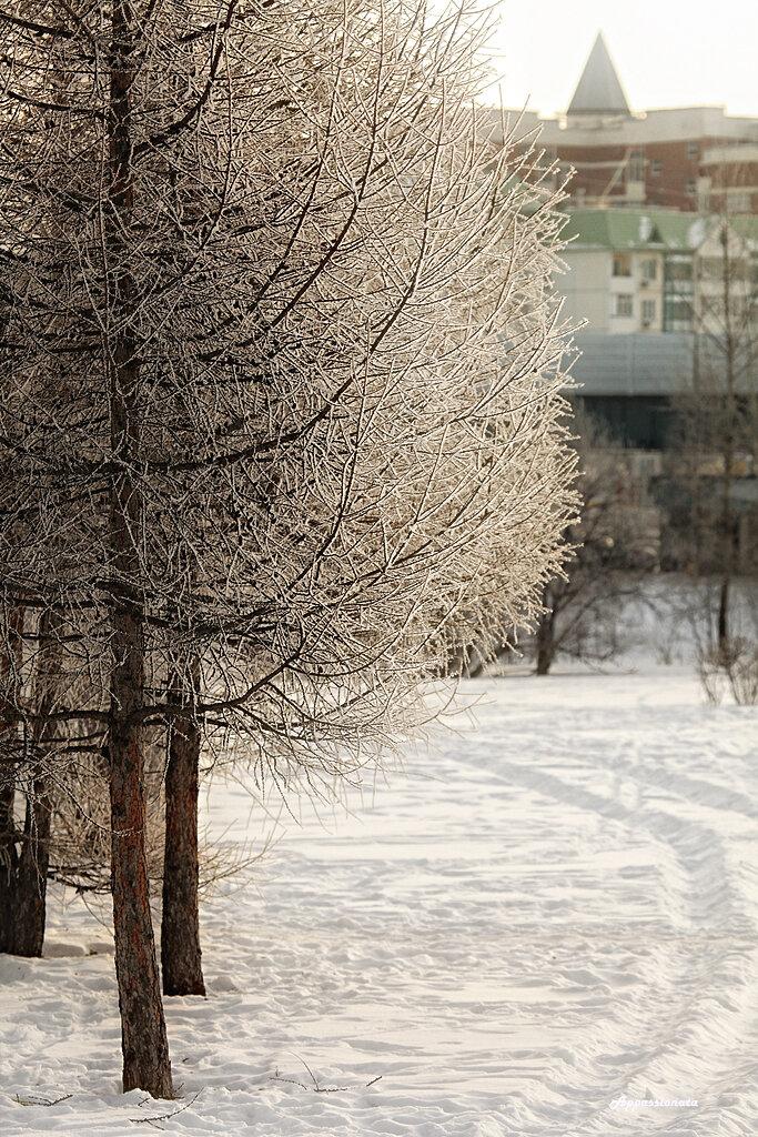 Московский январь