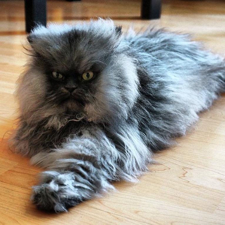 данной самые пушистые котята в мире фото день