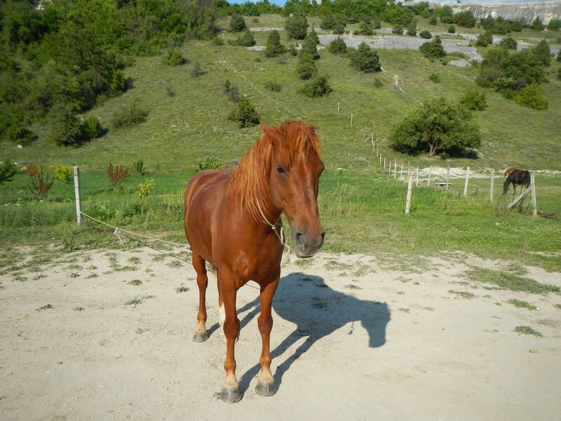 Лошади, кони и жеребята в пещерном городе Эски-Кермен, Крым DSCN3377.JPG