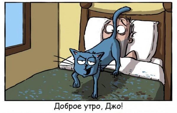 Месть коту