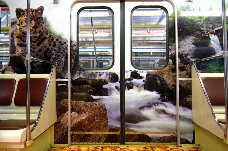 Леопард над водопадом