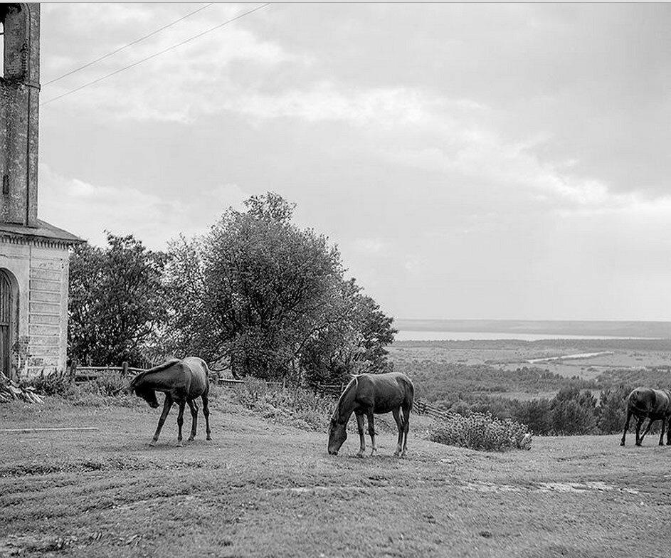Окрестности Галича.  Сынково. Кони пасутся у стен храма