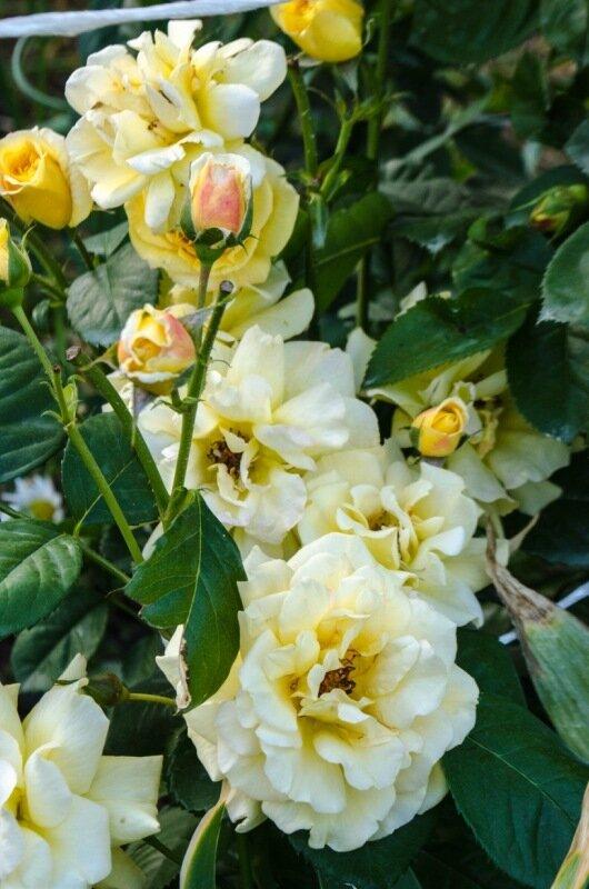 Сад и огород: О жизни: Дали дитю в руки зеркалку, или как я съездила в деревню (много фотографий с цветами)