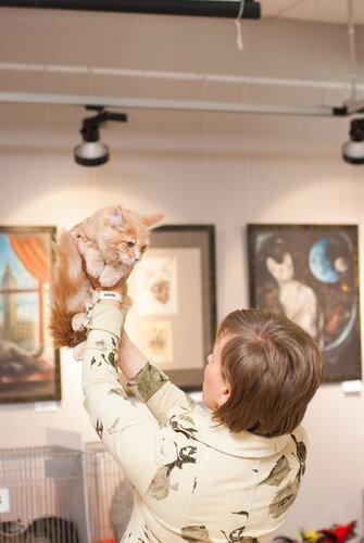 """Международная выставка кошек AFC """"Удивительные лесные кошки"""", 1 марта 2014 г. Сургут 0_b2629_b8801ea4_L"""