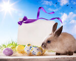 Easter greeting card with the Easter bunny and Easter eggs
