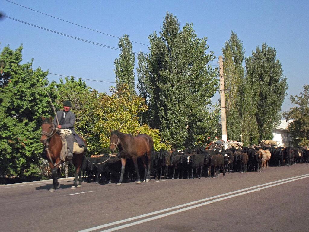 Коканд - Ташкент