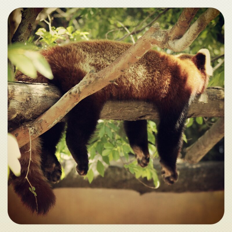 зоопарк города Сан-Диего