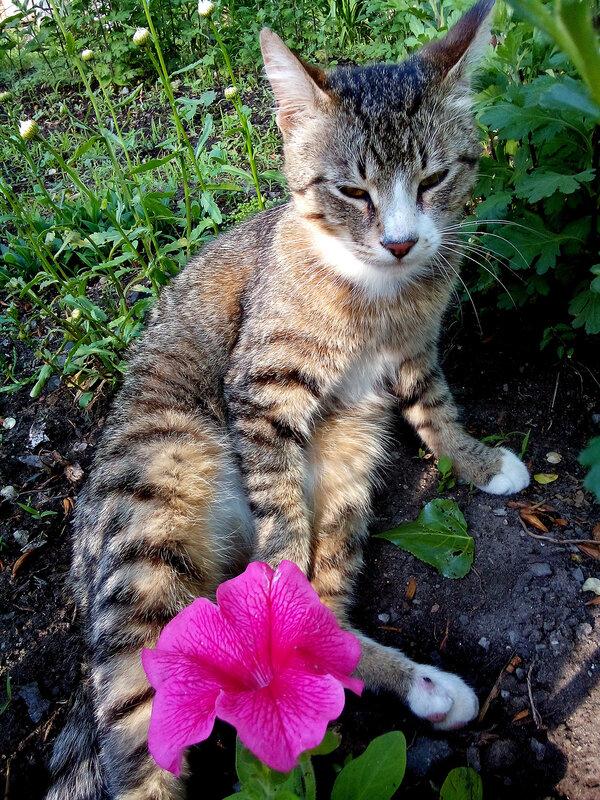 Цветочный кот-2.jpg