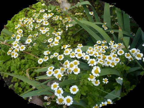 Karışık renkli çiçekler 04 karışık renkli çiçekler