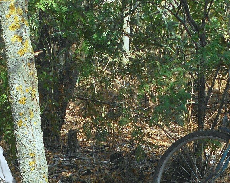 В лесу...DSCN1410 - 2.JPG