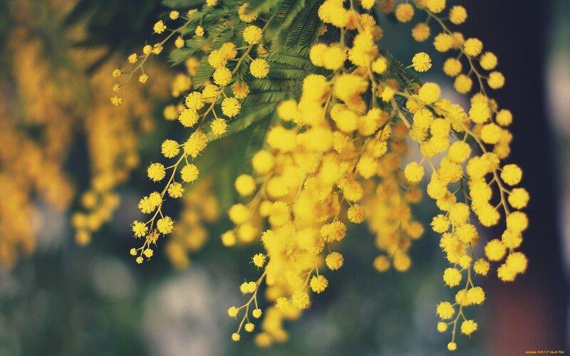 Цветы желтые весна без смс