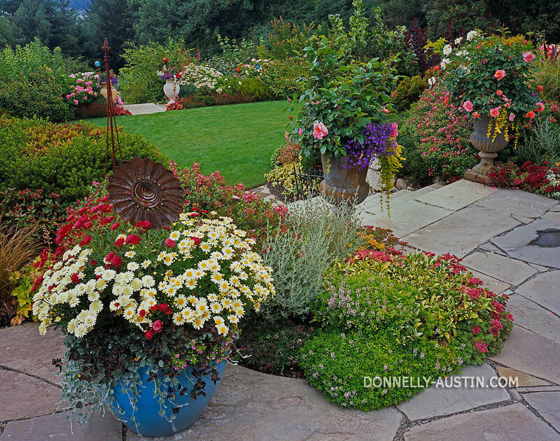 Vashon-Maury Island, WA: Flagstone patio & colorful pot of chyrsanthemums edged by perennial garden beds and stairs leading down to the lawn and tiered garden beds