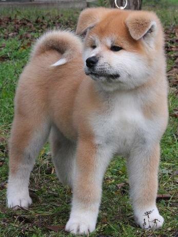 Красивые и добрые собаки 0_cf062_7b2d0837_L
