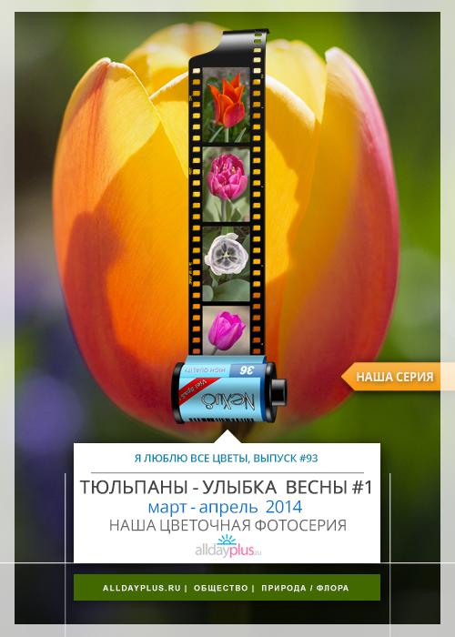 Я люблю все цветы, выпуск #93 | «Тюльпаны - улыбка Весны».