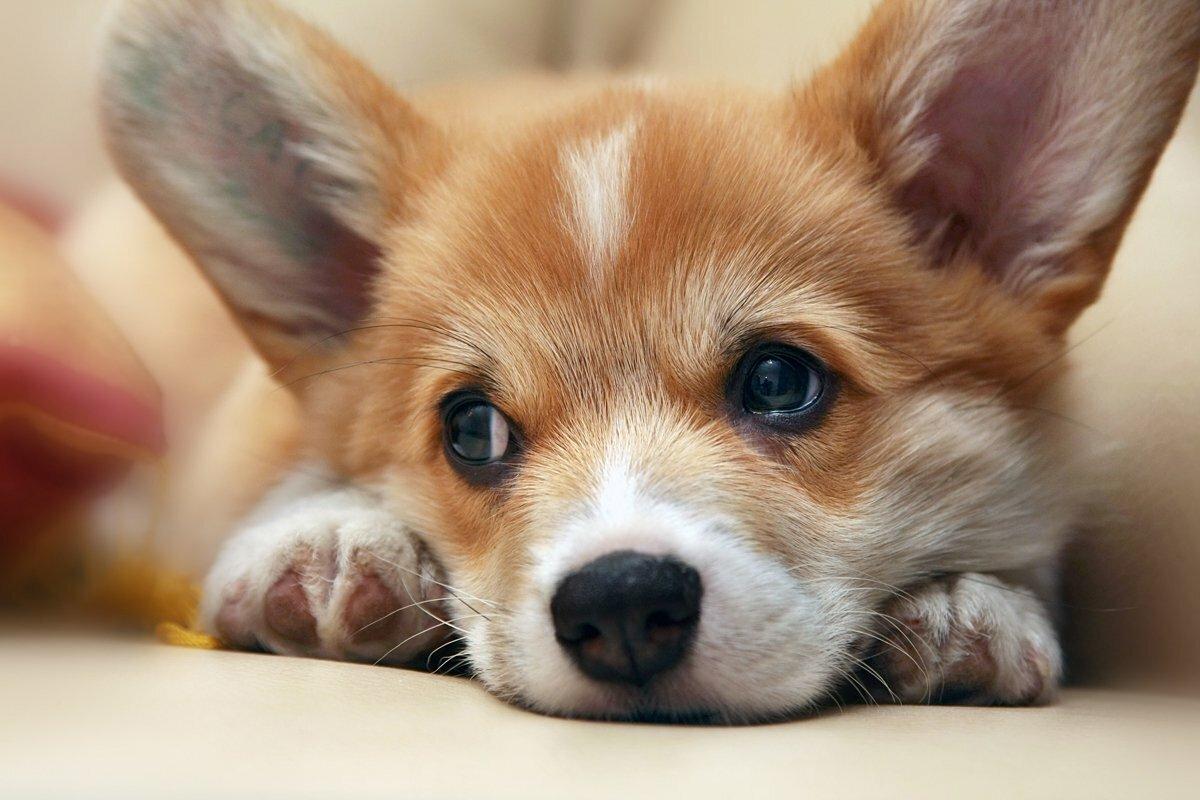 собака текста фото