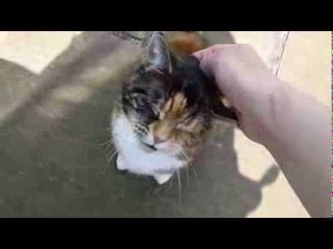 Кот мяукает басом