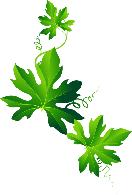 листья.png