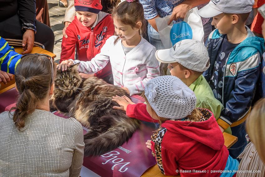 самый большой кот мэйнкун и дети