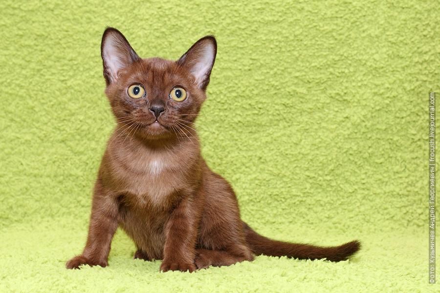 девочка котенок продажа