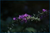 http://img-fotki.yandex.ru/get/9325/15842935.19e/0_d7f1f_eee3dcea_orig.jpg
