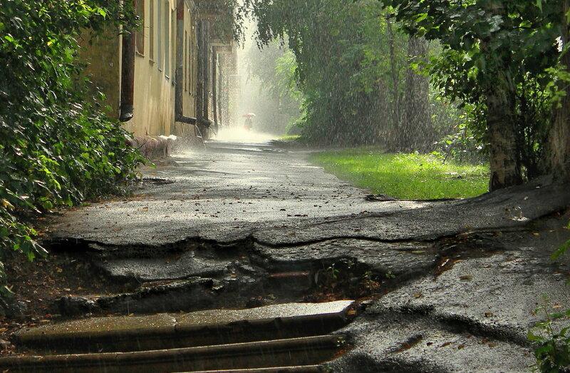 Грибной дождичек