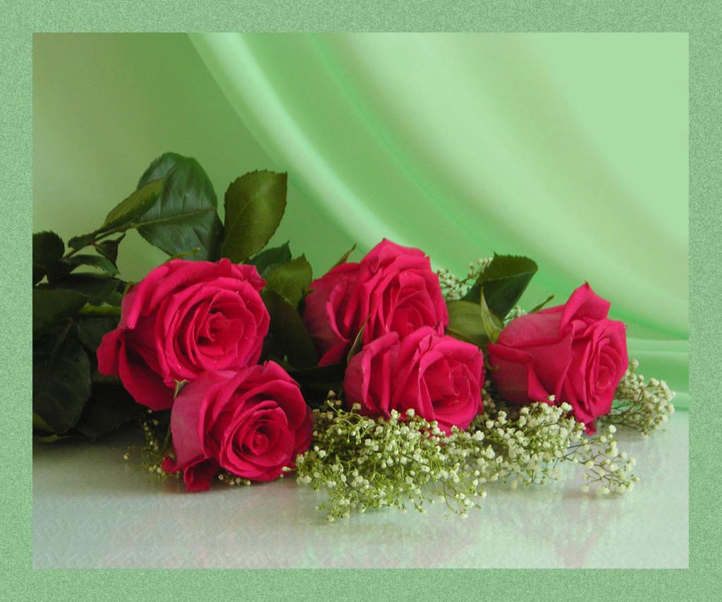 Пять роз на нежном зеленом фоне