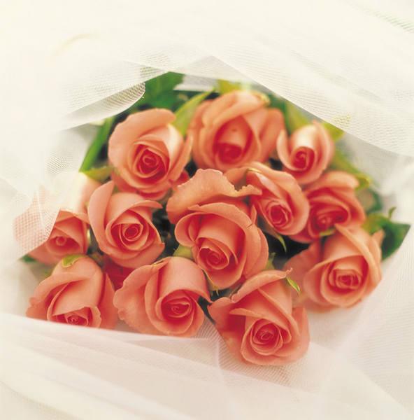 Букет роз приготовили для подарка