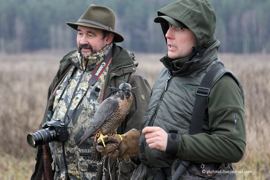 Соколиная охота