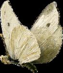 ldavi-paintersfaeries-whitemoth1.png