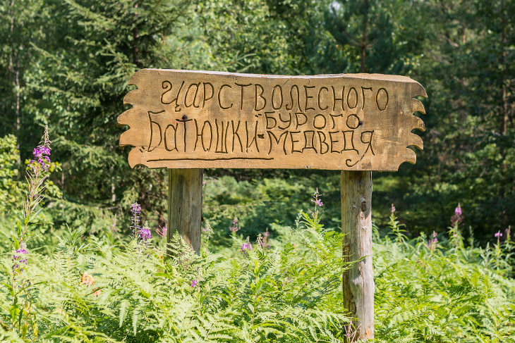 Центр спасения медведей в Тверской области (18 фото)