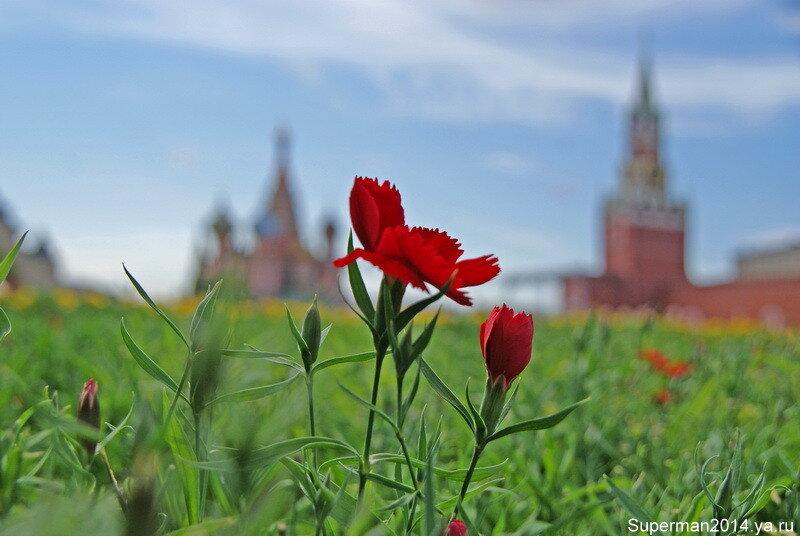 на Красной площади...