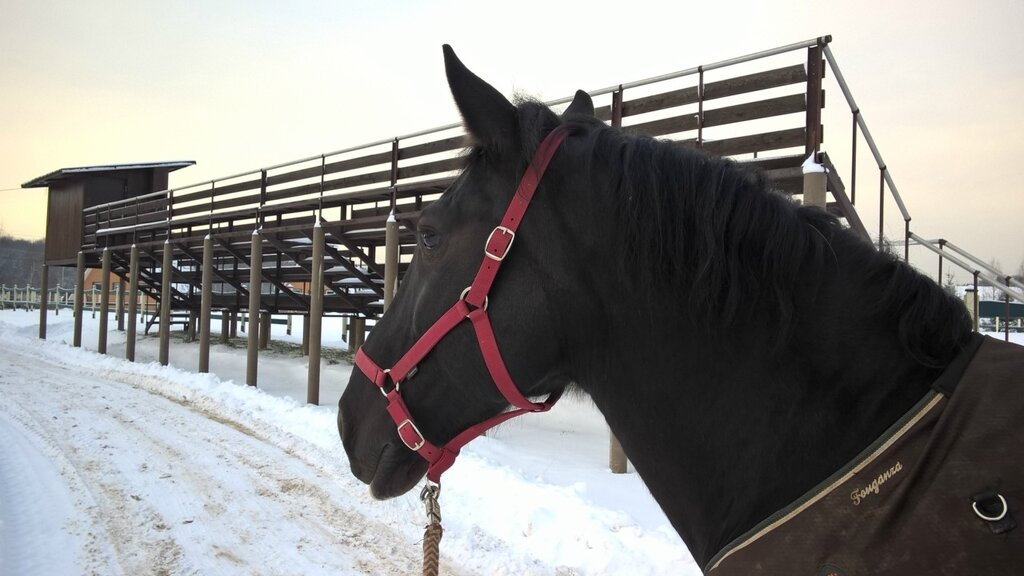 Эквиленд, лошади