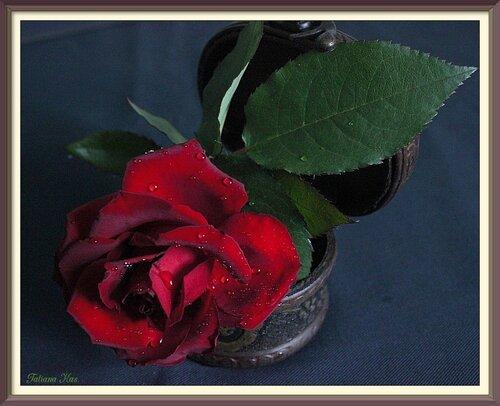 Брутальная роза.