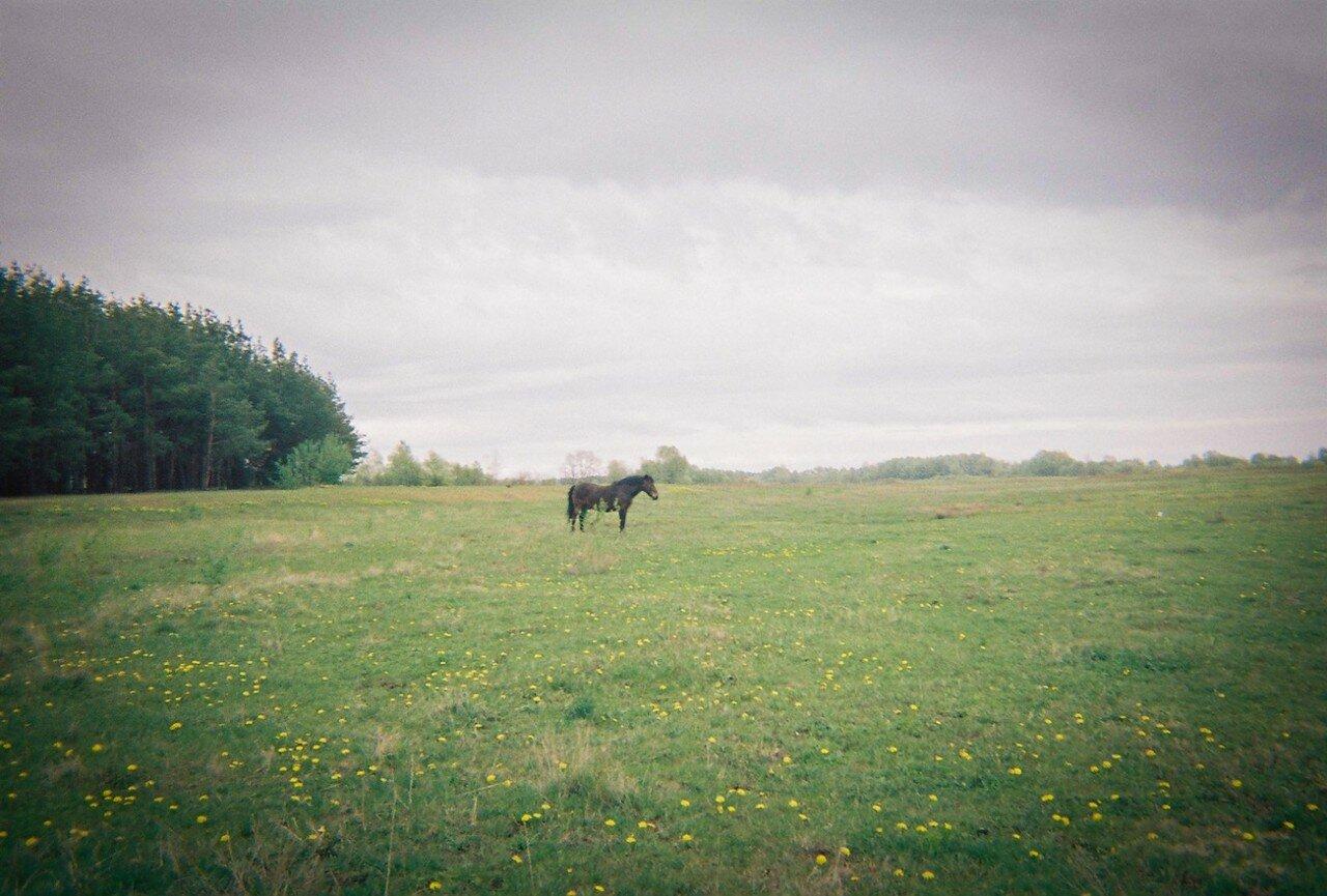 Лошадь стоит в поле вблизи зоны отчуждения