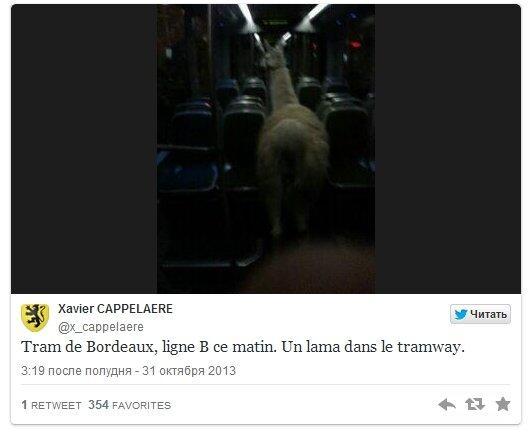 Пьяные французские студенты украли ламу