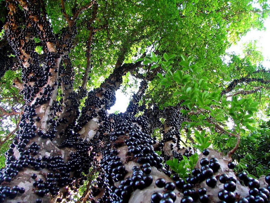 пряди девочки дерево за которым будут прятаться евреи видео теме Краткая история